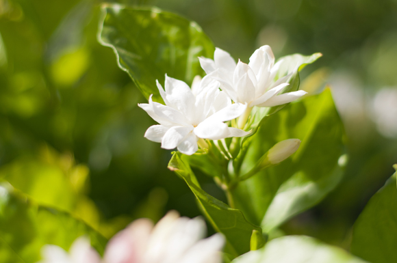Create your space homestead gardens inc homestead gardens inc - Climbing plants that produce fragrant flowers ...