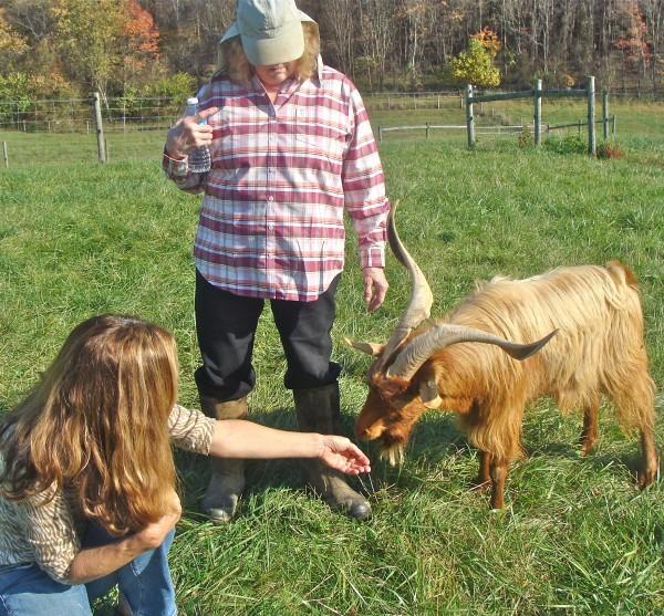 A Visit to Many Rocks Farm-Kiko Goats, Mulefoot Hogs and