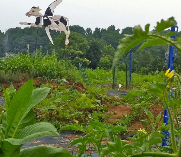 The kitchen garden and those down and dirty questions for Gardening questionnaire