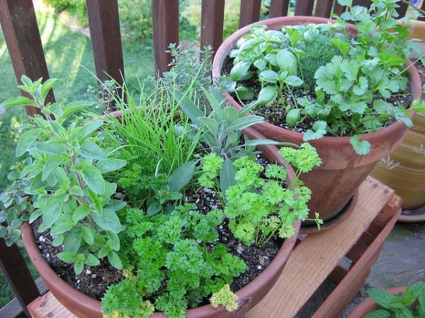 Garden Design Garden Design with Container Gardening Ideas