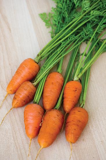 CarrotCaracasHybrid