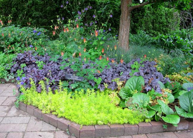 IMG_3476 Cannas Garden Designs With Sedum on garden design with liriope, garden design with delphinium, garden design with daylilies, garden design with rose bushes, garden design with bougainvillea,