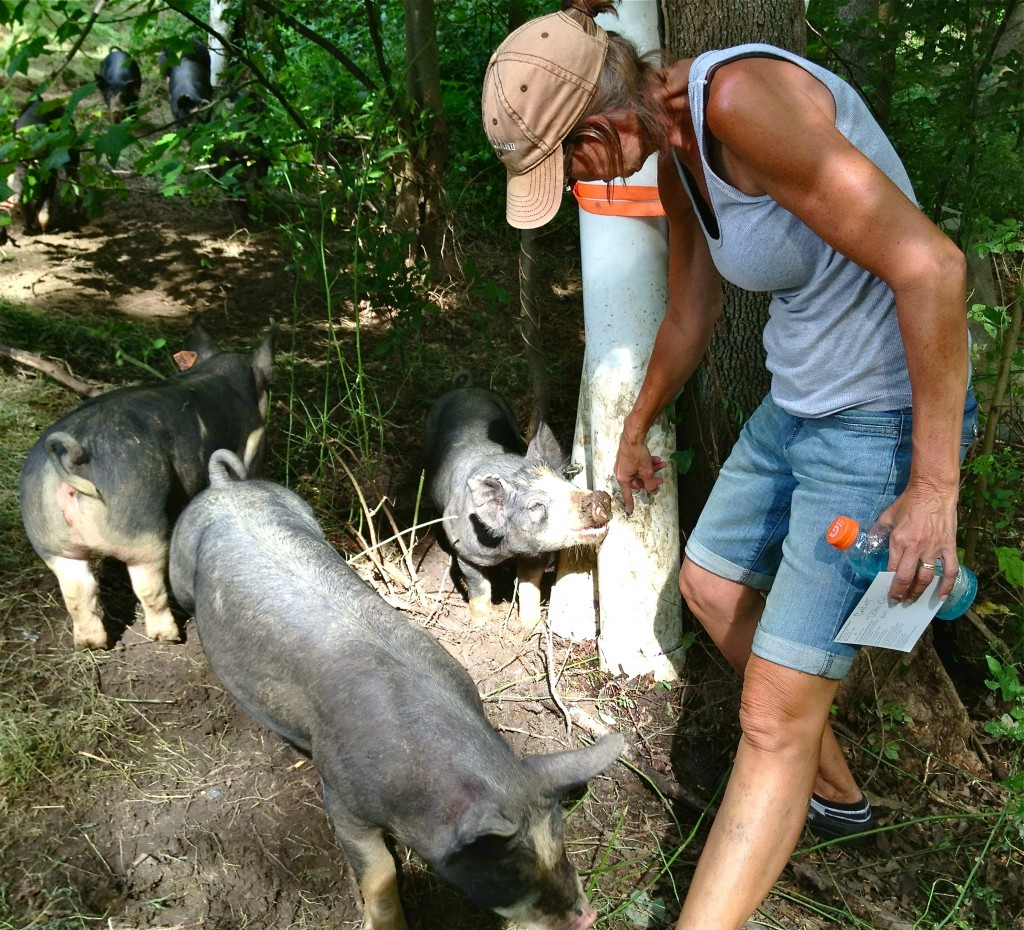 The symbiotic cycle of the animals thriving on the land while also returning nutrition to the soil is one of the most rewarding relationships a farm can cultivate. Of this, Cabin Creek Heritage Farm is a shining example.