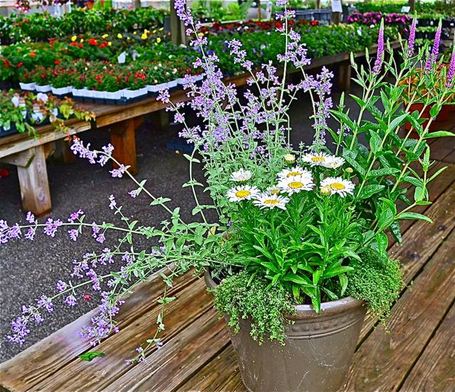 butterfly-container-garden