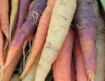 carrot-banner-image