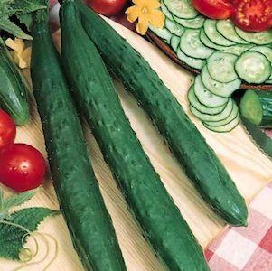 cucumber_tasty_jade_