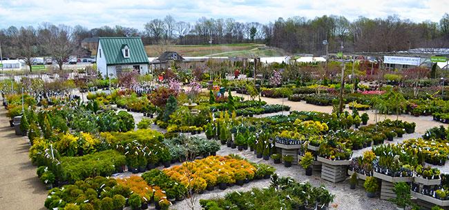 davidsonville-nursery-yard