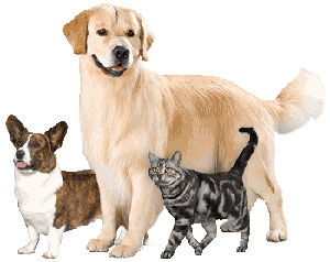 dogs-cat