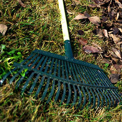 fall-leaf-raking