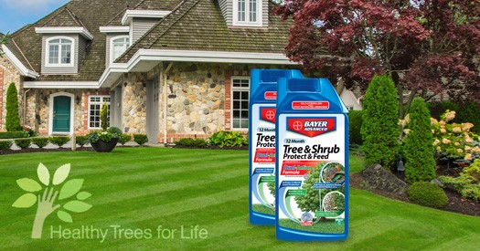 healthy-trees-for-life-bayer-525x275