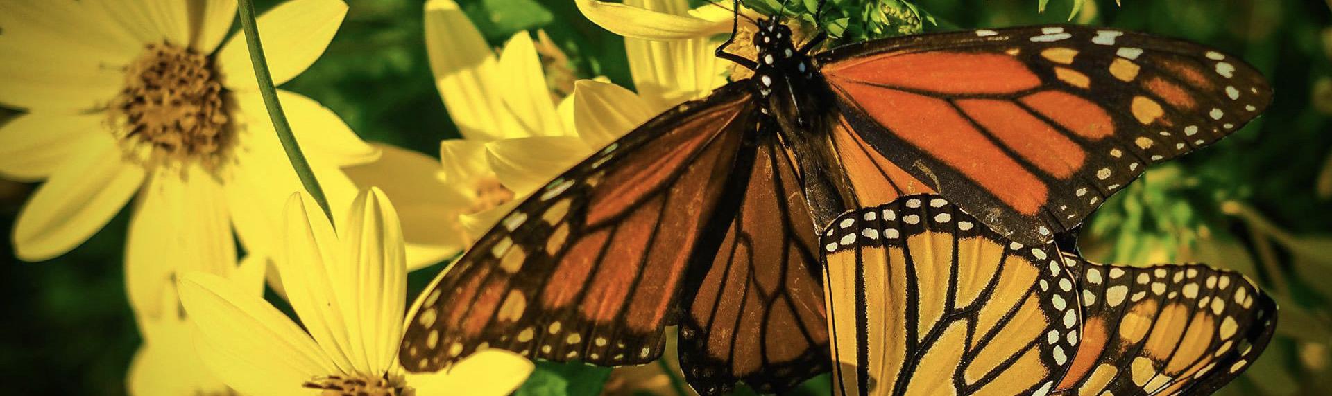 Pollinator Club