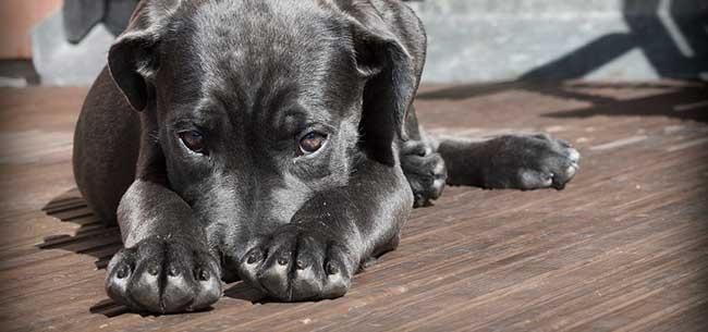 puppy1-banner