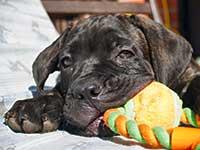 puppy3-small