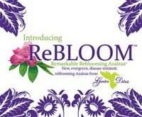 rebloom-azalea-logo