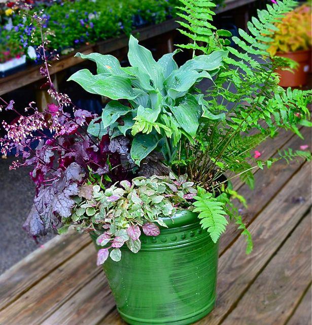shade-container-garden