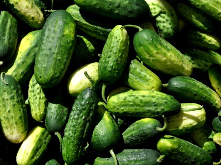 stoneyplainspicklingcucumbers1
