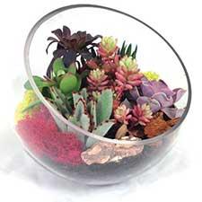 succulent-bowl